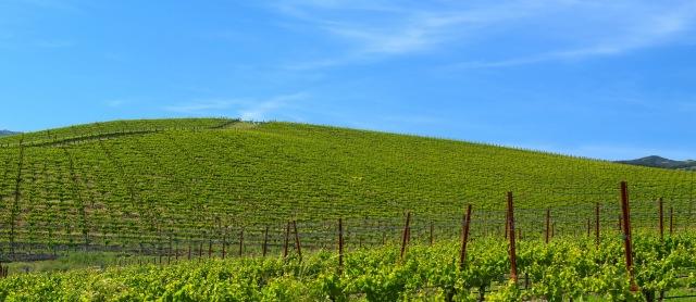 bliss2 Google Street View exibe a famosa paisagem do Windows XP