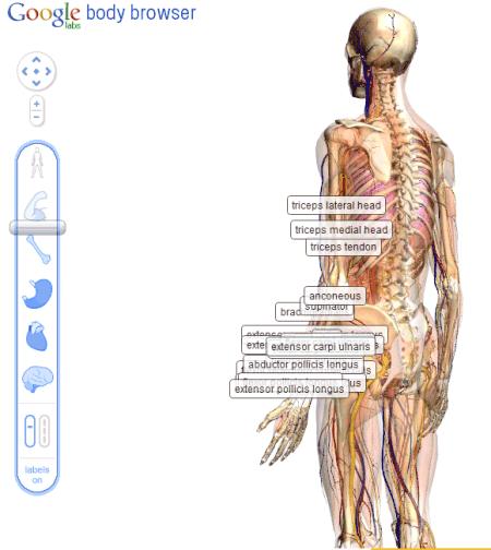 google body browser1 Google Labs: Google Body Browser